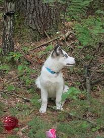 Jasparr puppy (updated 10/6/2013) Week13-02