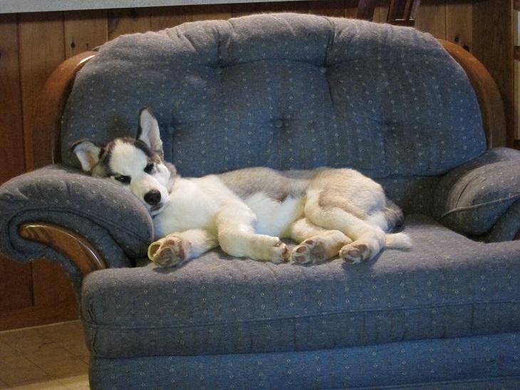 Jasparr puppy (updated 10/6/2013) Week15-3