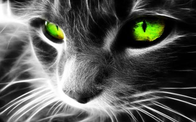Les chats et leur champs énergétique vous protègent vous et votre maison des esprits errants et négatifs Green-eyes-cat-36038