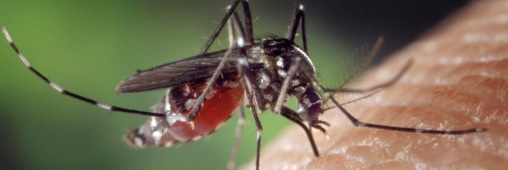 Tous les répulsifs anti-moustique Aedes_albopictus_on_human_skin