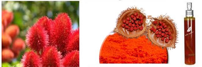 L'urucum, la plante qui illumine votre peau Urucum-cosmetique2