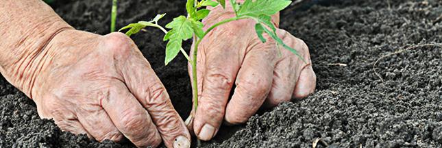 Les Saisons - Page 37 Potager-bio-jardin-bio-jardinage-legumes-02-ban