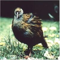 موسوعة الحيوانات المهددة بالإنقراض Weka