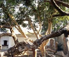 شجرة مريم بالمطرية 1r5