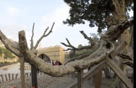 شجرة مريم بالمطرية Img83