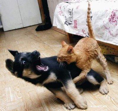 imagini amuzante Poze_animale_amuzante_pisici_c_a