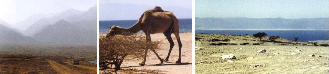 Arheoloski ponalasci kod planine Sinaj.    Sinaj01