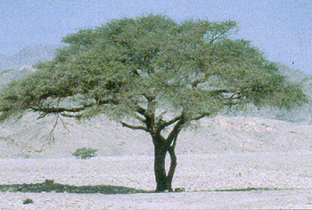 Arheoloski ponalasci kod planine Sinaj.    Sinaj30