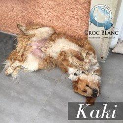 KAKI - x golden 5 ans - Asso Croc Blanc  Kaki1_250x250_1