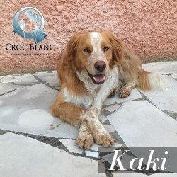 KAKI - x golden 5 ans - Asso Croc Blanc  Kaki2_250x250