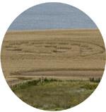 Crops Circles Agosto/2014 Hawkhill2014c