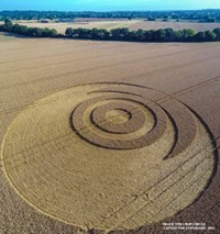 Crop Circle at Ironwell Lane, nr Stroud Green, Essex, United Kingdom. Reported 24th August  2014 10649517_10203276786572816_5382921939030054797_n