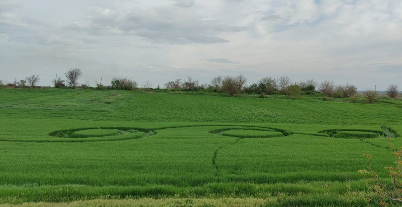 Crop Circles 2021 -  Tenginskaya, in Krasnodar, Russia.  Reported 3rd May Tenginskaya2021b