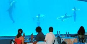 El Acuario Acuario-restaurante-300x154