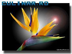 Florile noastre preferate 57080