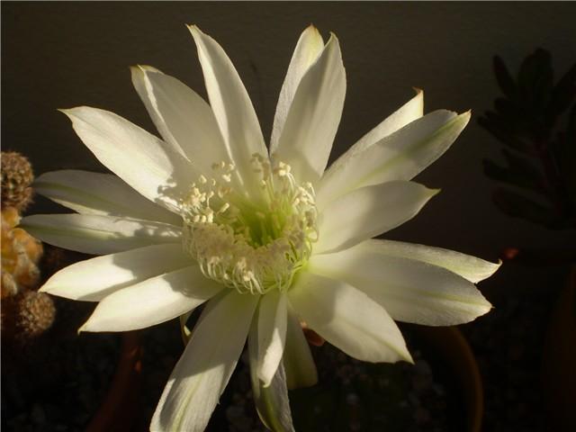 Uporedite vaše voljeno biće sa cvijetom 5547ba6d-Picture%20091