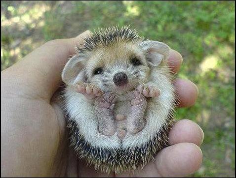 Όμορφες εικόνες... - Σελίδα 2 Cute-hedgehog