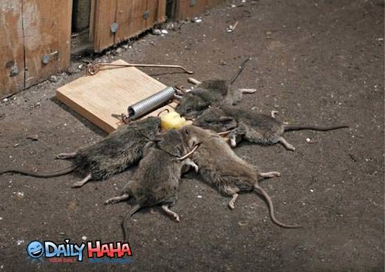 The University of Solar System Studies Effective_mouse_trap