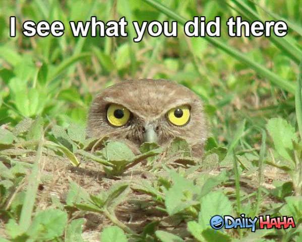 Se cuvstvuvam .....kako na slikata - Page 3 I-see-it-owl
