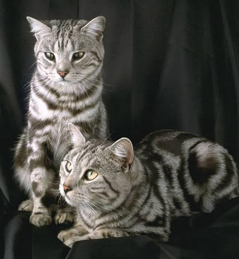 Supersticiones sobre los gatos. Gatos