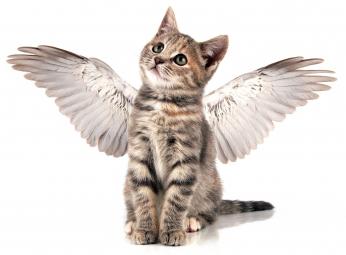 Conversaciones con mi gata - Eduardo Jáuregui - Página 2 Kitten-with-angel-wings