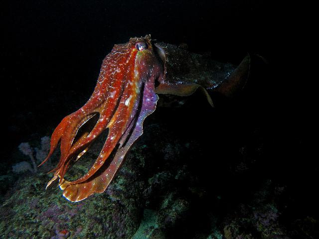 que suis  - je  - ajonc - 19 mars bravo Martine Cuttlefish6