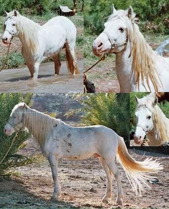 L'albinisme Albinos
