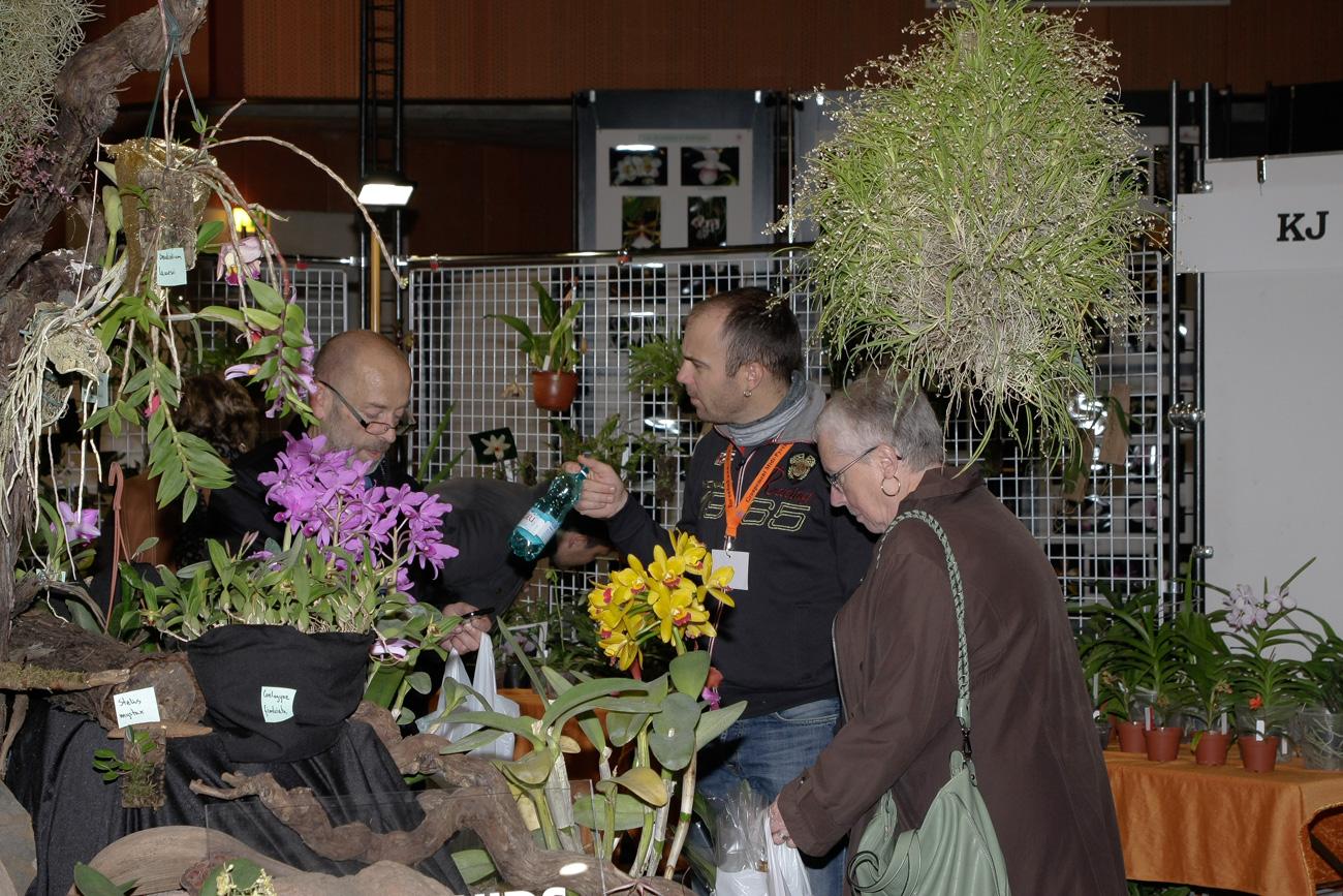Expo-vente d'Orchidées à l'Union-Toulouse les 4,5 et 6 Novembre 2016 Expo_2016_15
