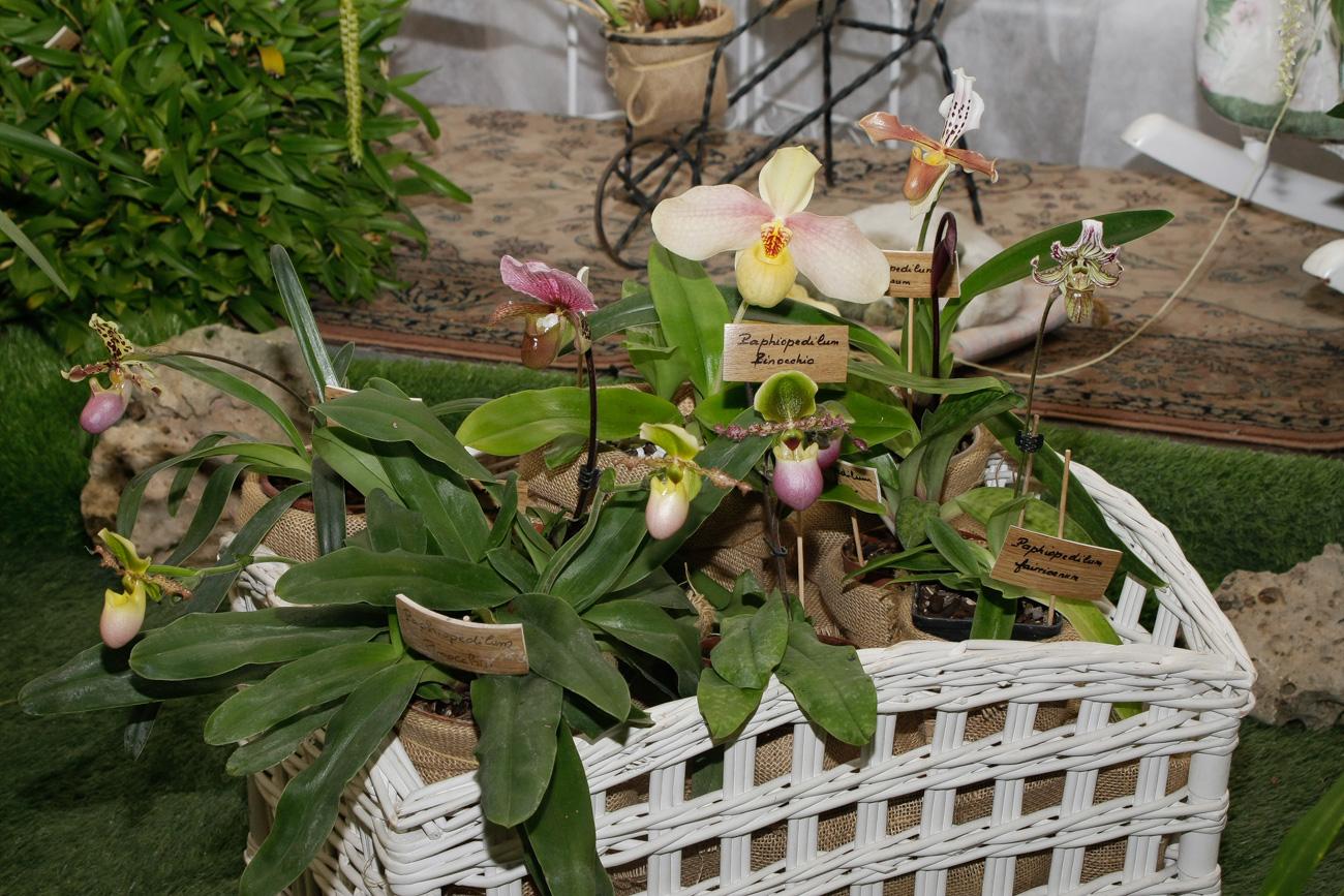 Expo-vente d'Orchidées à l'Union-Toulouse les 4,5 et 6 Novembre 2016 Expo_2016_16