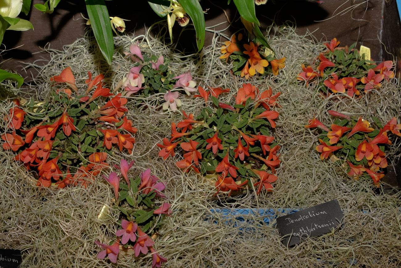 Expo-vente d'Orchidées à l'Union-Toulouse les 4,5 et 6 Novembre 2016 Expo_2016_5