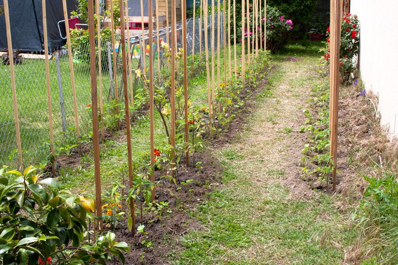 Tomates et compagnie, en folie Jardin1
