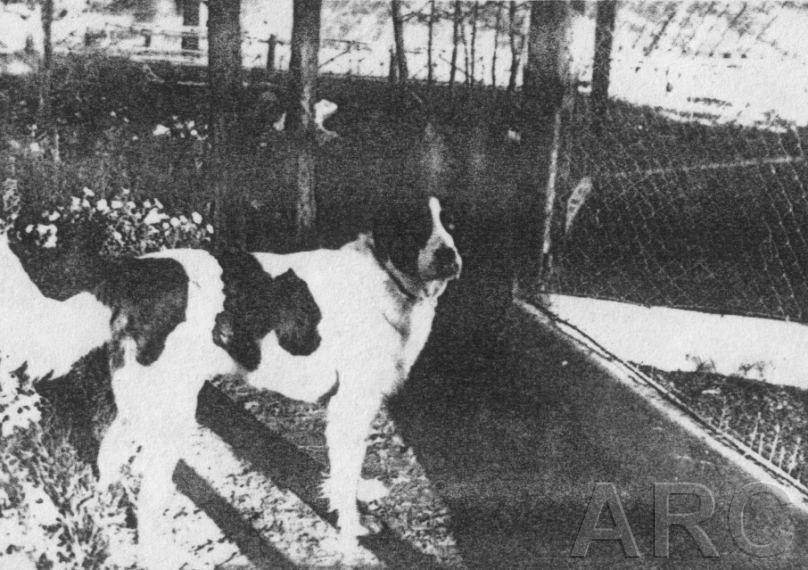 Treblinka : Histoire, plans et images - Page 2 Bigbarry06
