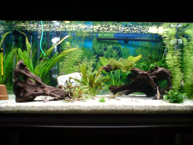 Premier Aquarium  Photo-aquarium-d%C3%A9co-aquarium-deau-douce-5