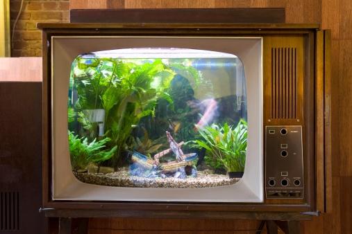 Touche pas aux Guignols Aquarium-tele