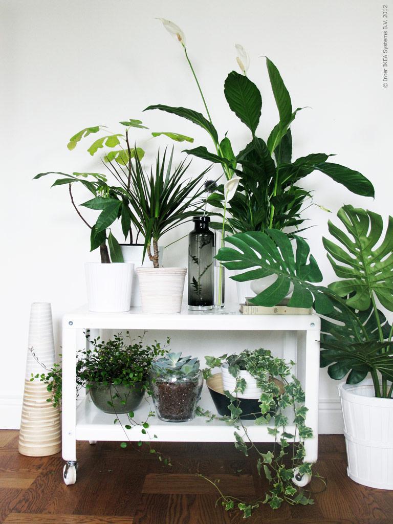 salon louis philippe Quelles_plantes_choisir_pour_mon_salon03
