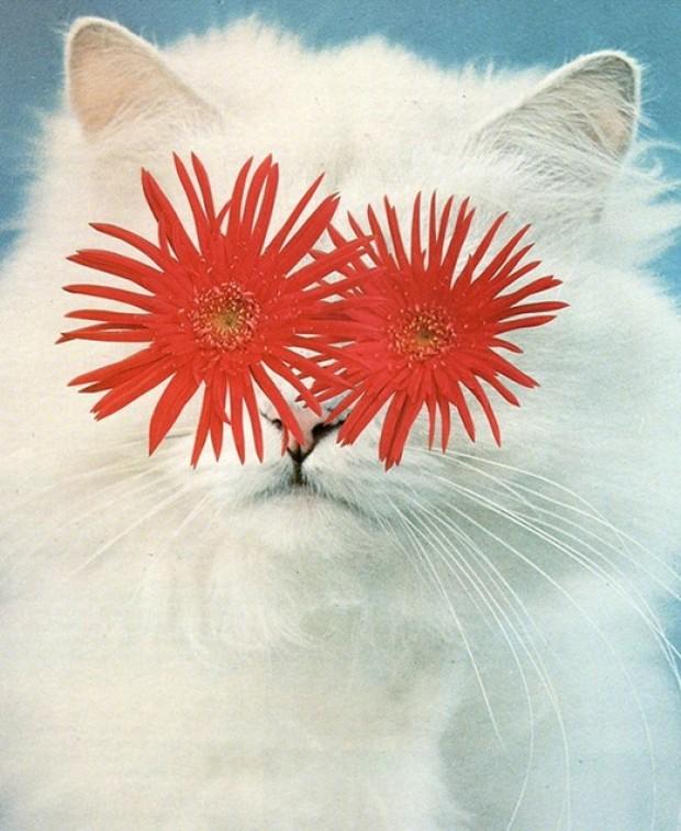 Le WTF du jour Stephen-eichhorn-cats-and-plants-3
