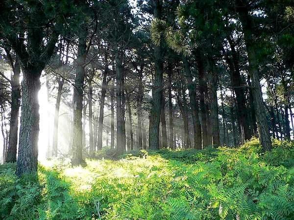 Centro del Bosque Bosque