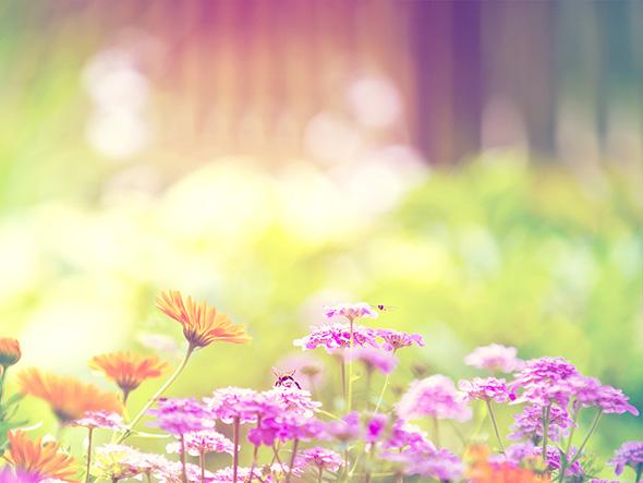 Весна... Пришел рассвет и миру улыбнулся... - Страница 10 Spring-8