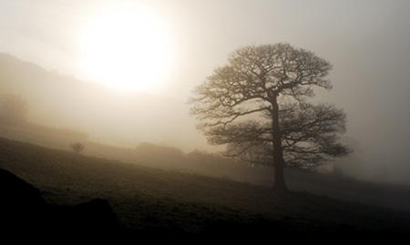 Bonne Mercredi Mist-tree
