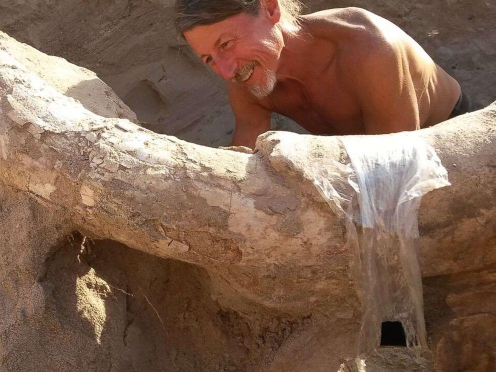 Un enfant découvre un fossile vieux de 1,2 million d'années alors qu'il se promenait avec sa famille ! Par Timothé G. Peter-houde-animal-fossil-ht-jpo-170719_4x3_992