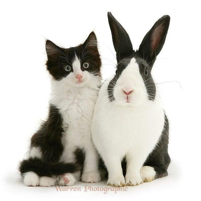 Les animaux faux jumeaux 12751343_530601810434257_618502405_n