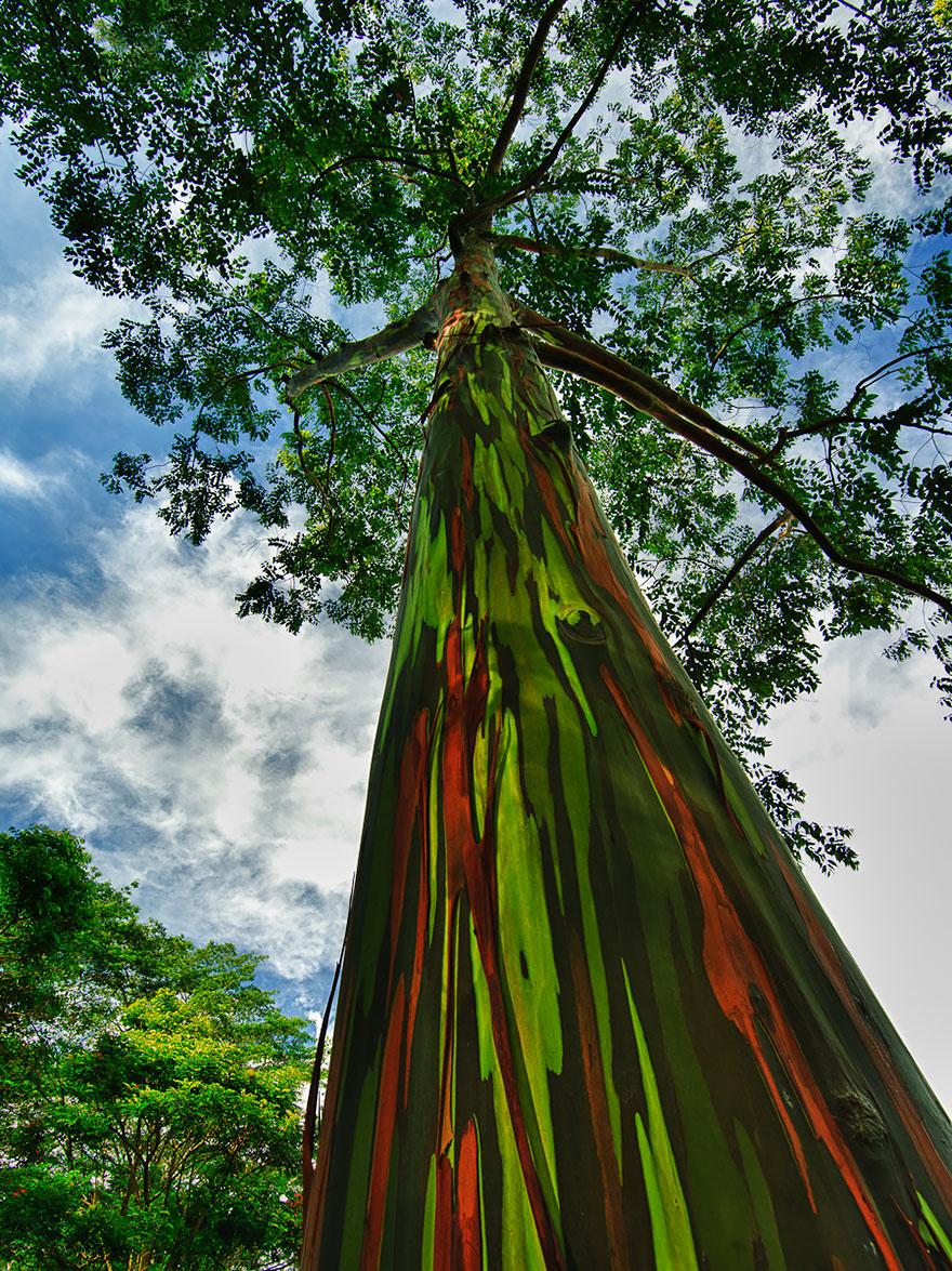 C'est de toute beauté : sites et lieux magnifiques de notre monde. Aeucalyptus
