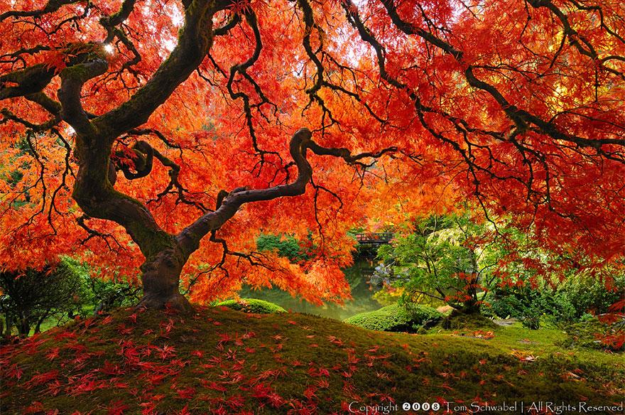 C'est de toute beauté : sites et lieux magnifiques de notre monde. Berablejap