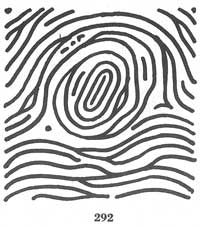 The TRIRADIUS in a fingerprint: how it develops, it's characteristics + a definition! - Page 4 Fig292