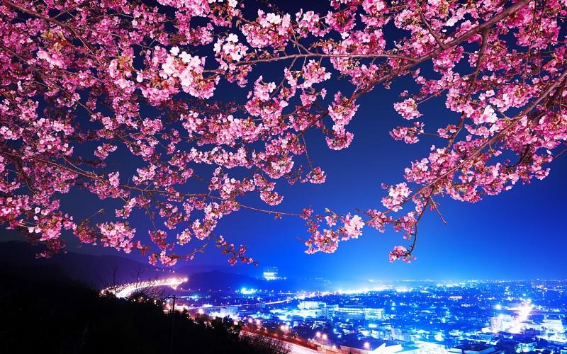 Proleće - Page 3 Mimura-japan-sakura-cherry-blossom-highway-city-night-trees-flowers-blossoms-wallpaper-169595