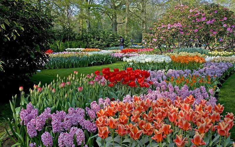Parkovi i vrtovi Landscapes-garden-park-color-trees-blossom-images-165991