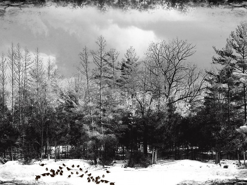 priroda u crno beloj boji - Page 6 Winter-black-white-images-45173