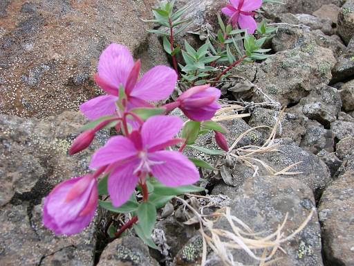 une fleur Martin 10 septembre trouvée par Martine 442c4193cfff