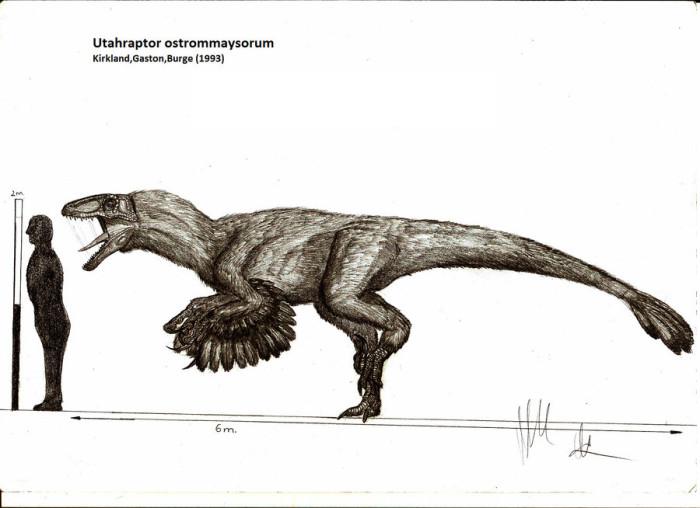 Utahraptor [Tuti1230 vs. 3lite vs. Coldfusion] Utahraptor_ostrommaysorum_by_teratophoneus-d4oq7xm-700x508