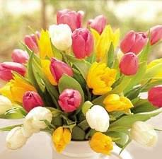 Urime 8 Marsin-dita nderkombetare e grave Tulpen